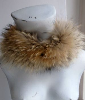 collar ,raccoon, nature, fur ,hood